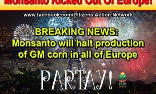 Ogm, la Monsanto rinuncia all'Europa – Vittoria per le organizzazioni ambientaliste