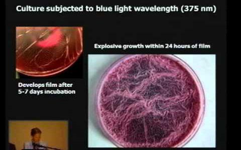 Biologa scomparsa dopo questo video