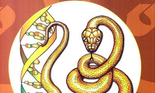 Kundalini e sesso durante la trasformazione in cammino – parte 2