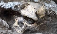 Cranio di Homo erectus getta storia dell'evoluzione umana nel caos