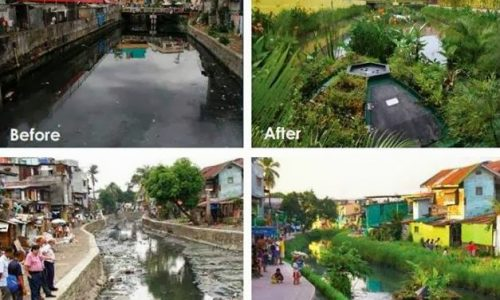 Bio-Risanamento Di Corsi D'acqua Inquinati