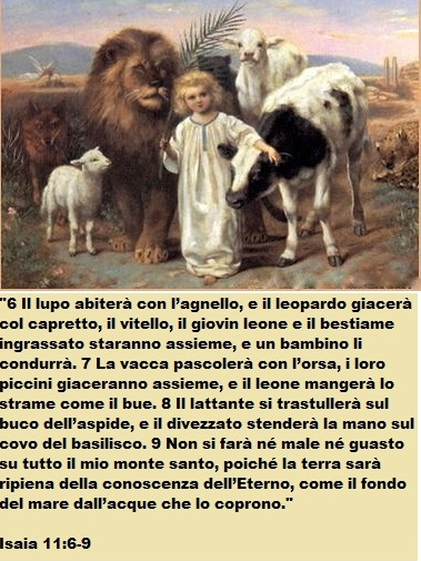 Lamb_Lion_Wolf_Calf