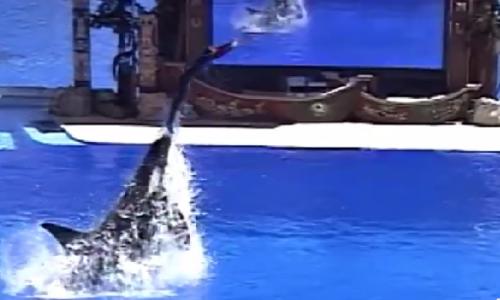 Blackfish – storia di un'orca