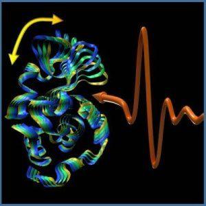 """Svelata la 'sinfonia della vita' –  le proteine vibrano come il """"suono di una campana"""""""