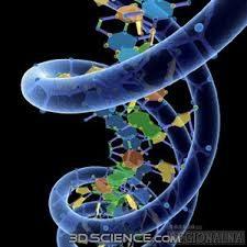 Straordinaria scoperta: gli scienziati trovano un secondo codice nascosto all'interno del DNA