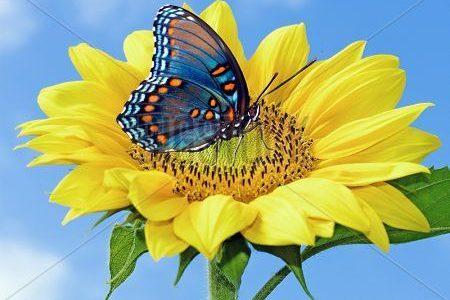Farfalla – il significato