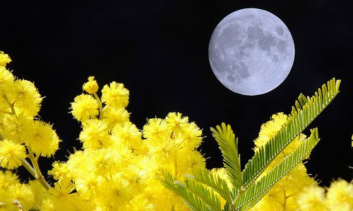 8 marzo – Non regalatemi mimose