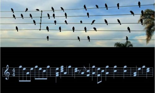 Uccelli compositori