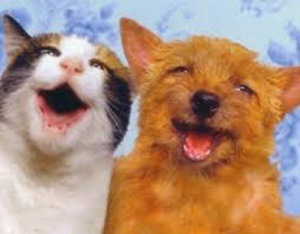 canni e gatti