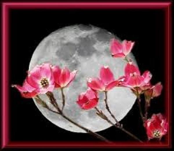 luna maggio