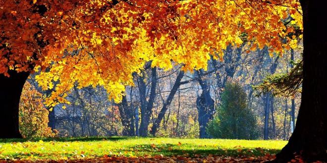 autunno-alimentazione-prepararsi-660x330