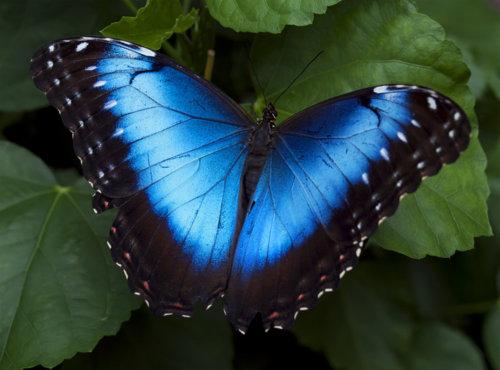 farfalla5