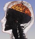 brain_consumes