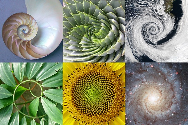 Exponential-Evolution-DNA-Activation-and-The-Golden-Ratio-in-nature