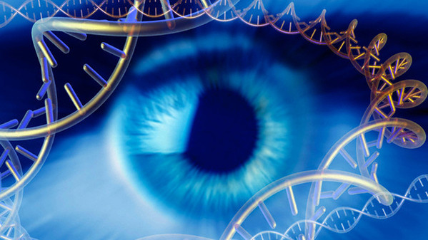 Original caption: Genetics research, conceptual computer artwork. Human eye surrounded by molecules of DNA (deoxyribonucleic acid). --- Image by © E.M. Pasieka/Science Photo Library/Corbis